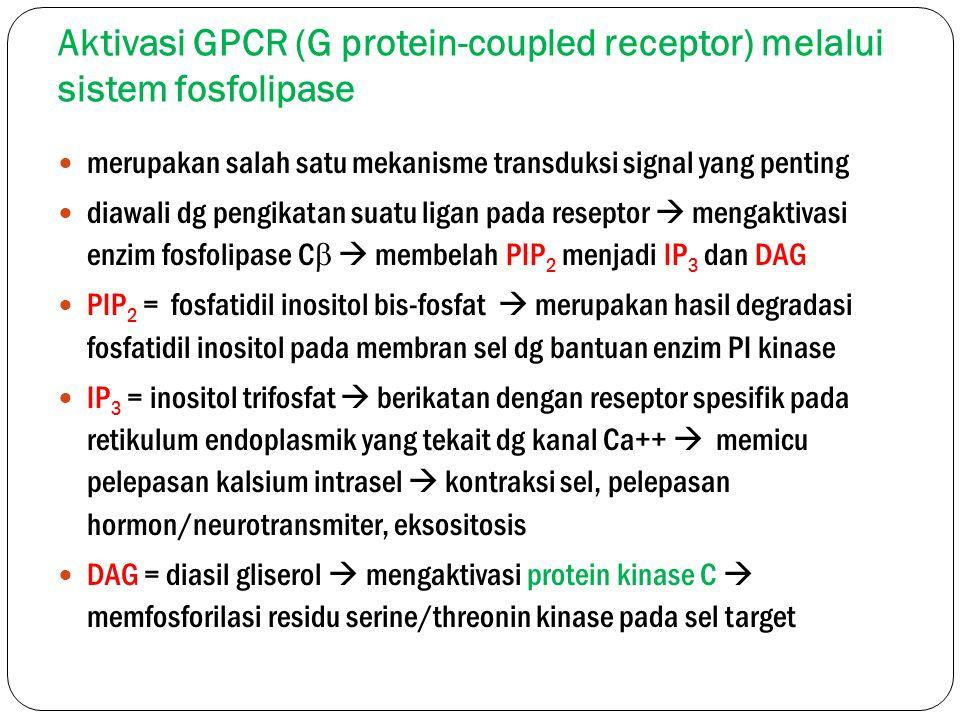 Aktivasi GPCR (G protein-coupled receptor) melalui sistem fosfolipase merupakan salah satu mekanisme transduksi signal yang penting diawali dg pengika