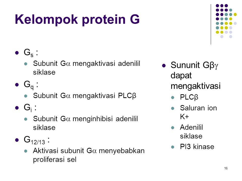16 Kelompok protein G G s : Subunit G  mengaktivasi adenilil siklase G q : Subunit G  mengaktivasi PLCβ G i : Subunit G  menginhibisi adenilil sikl
