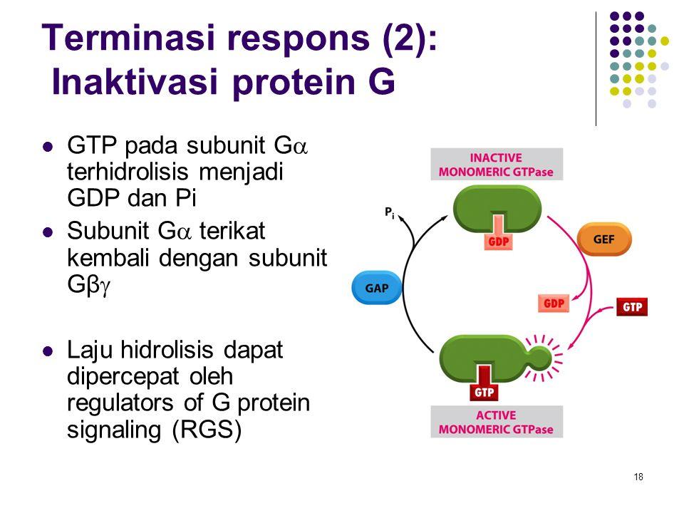 18 Terminasi respons (2): Inaktivasi protein G GTP pada subunit G  terhidrolisis menjadi GDP dan Pi Subunit G  terikat kembali dengan subunit Gβ  L