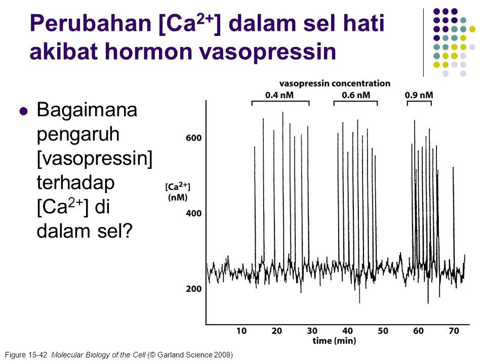 24 Figure 15-42 Molecular Biology of the Cell (© Garland Science 2008) Perubahan [Ca 2+ ] dalam sel hati akibat hormon vasopressin Bagaimana pengaruh