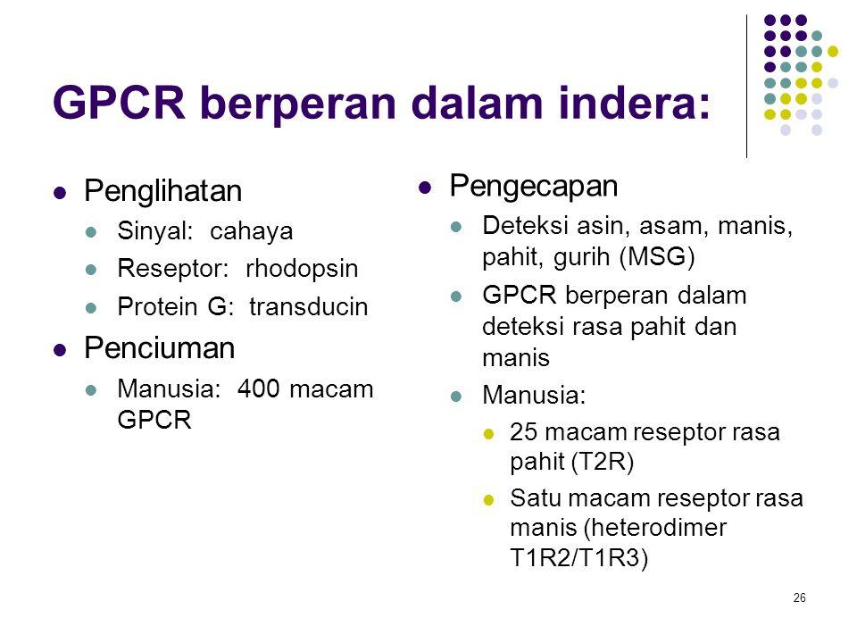 26 GPCR berperan dalam indera: Penglihatan Sinyal: cahaya Reseptor: rhodopsin Protein G: transducin Penciuman Manusia: 400 macam GPCR Pengecapan Detek