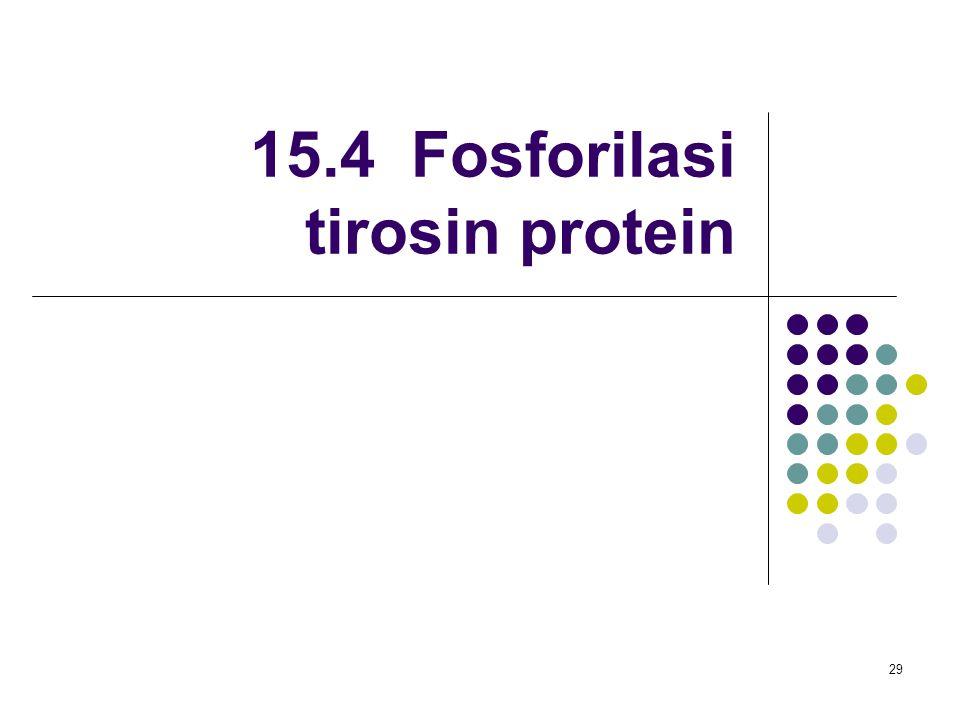 29 15.4 Fosforilasi tirosin protein