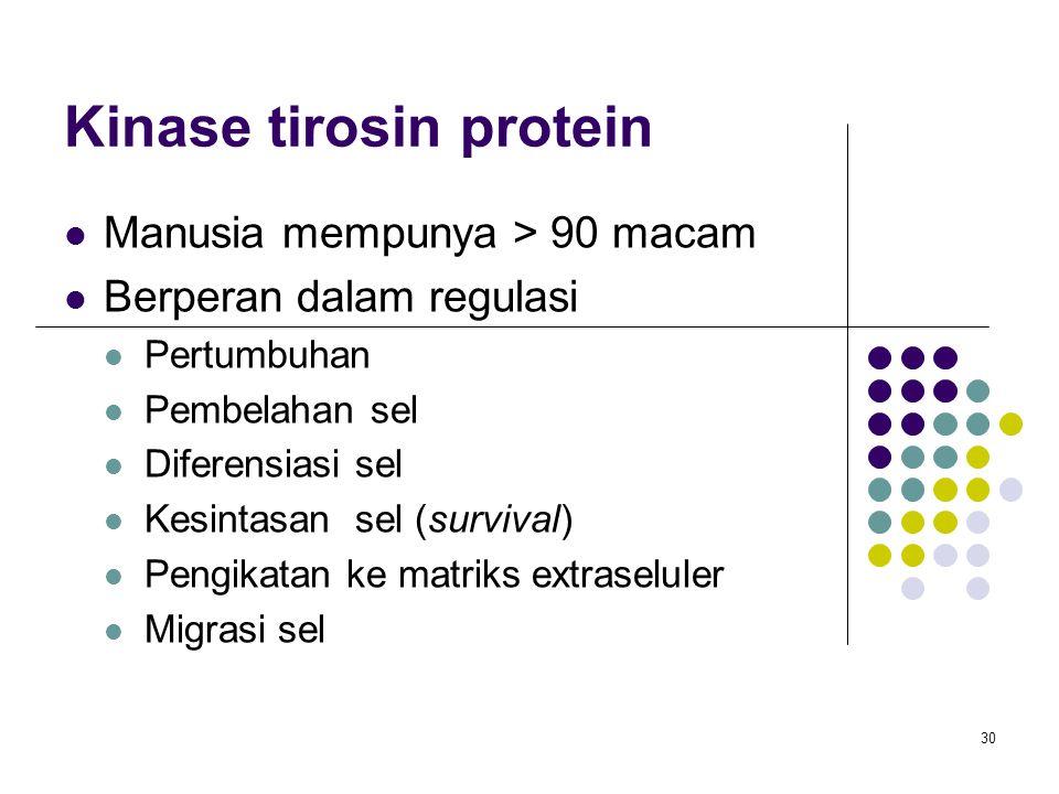 30 Kinase tirosin protein Manusia mempunya > 90 macam Berperan dalam regulasi Pertumbuhan Pembelahan sel Diferensiasi sel Kesintasan sel (survival) Pe