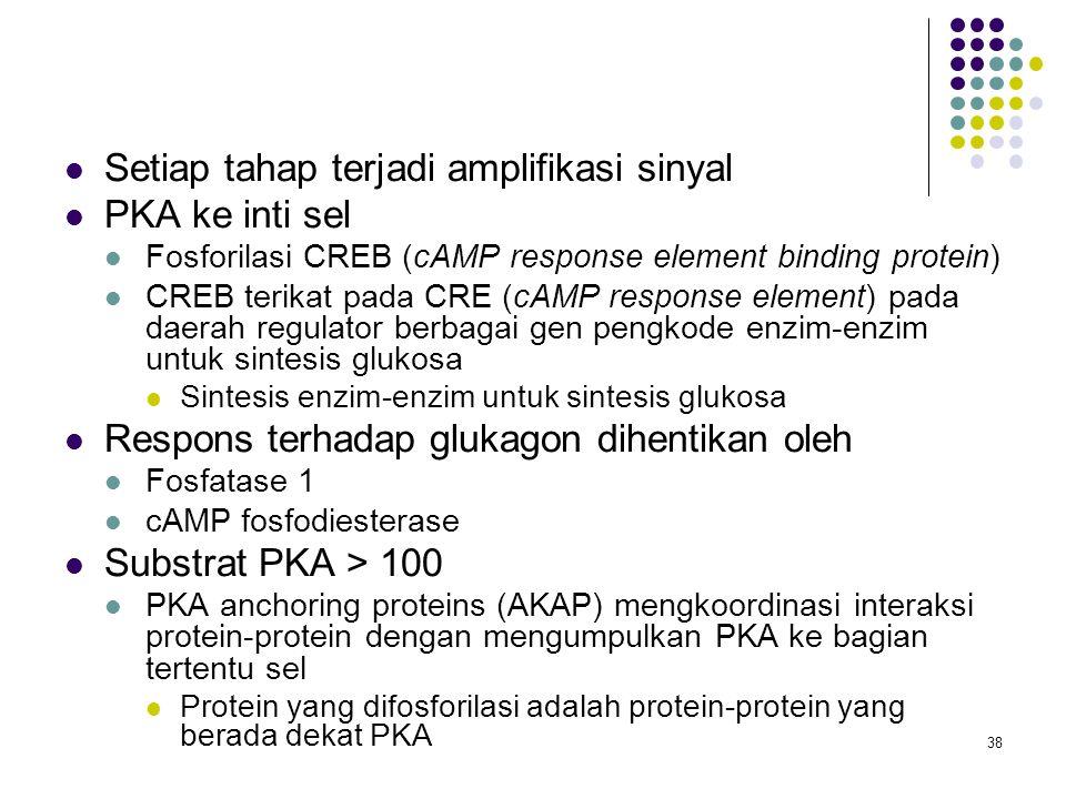 38 Setiap tahap terjadi amplifikasi sinyal PKA ke inti sel Fosforilasi CREB (cAMP response element binding protein) CREB terikat pada CRE (cAMP respon