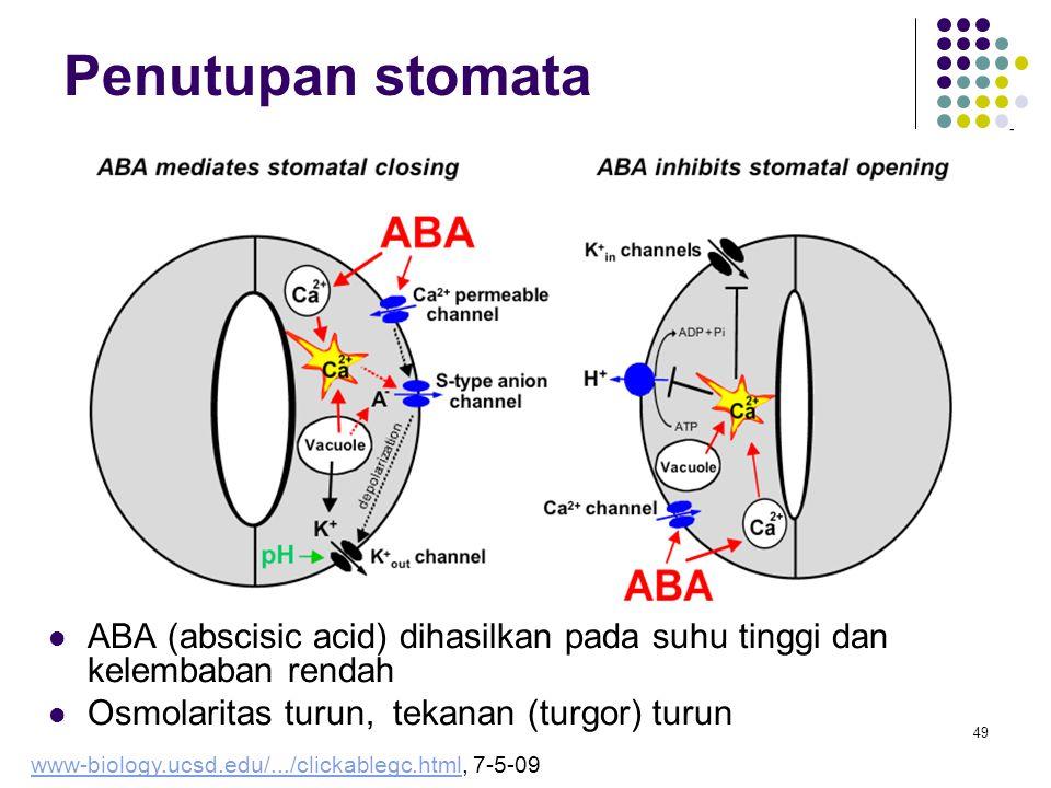 49 Penutupan stomata ABA (abscisic acid) dihasilkan pada suhu tinggi dan kelembaban rendah Osmolaritas turun, tekanan (turgor) turun www-biology.ucsd.