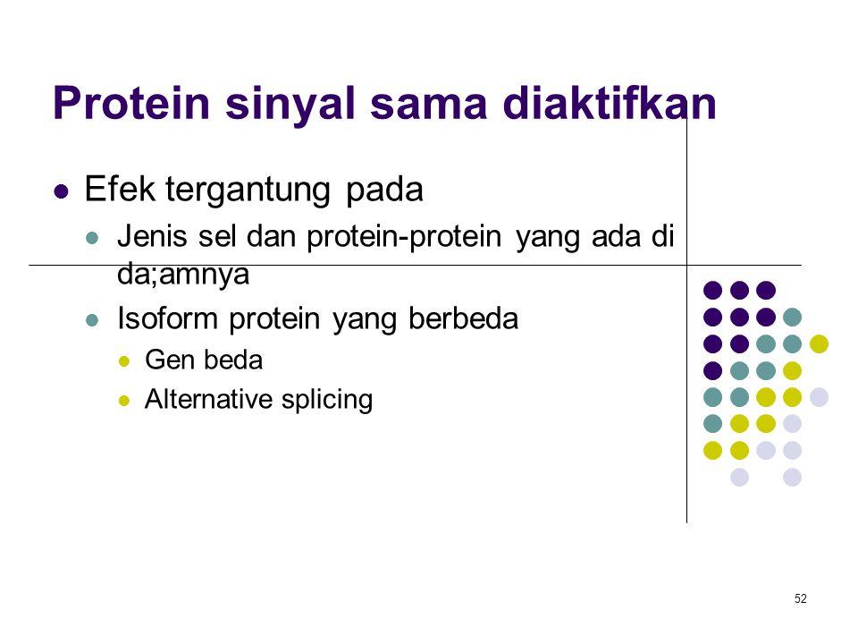 52 Protein sinyal sama diaktifkan Efek tergantung pada Jenis sel dan protein-protein yang ada di da;amnya Isoform protein yang berbeda Gen beda Altern