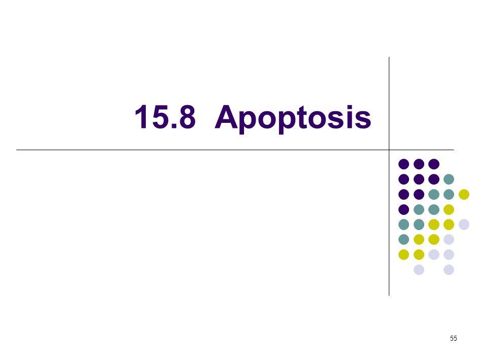 55 15.8 Apoptosis