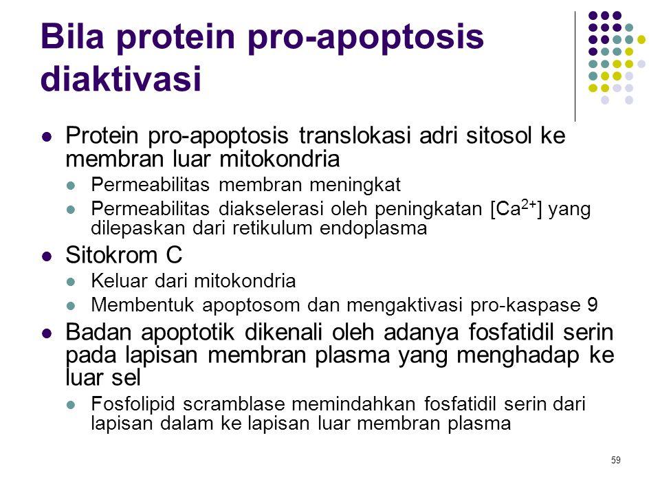 59 Bila protein pro-apoptosis diaktivasi Protein pro-apoptosis translokasi adri sitosol ke membran luar mitokondria Permeabilitas membran meningkat Pe