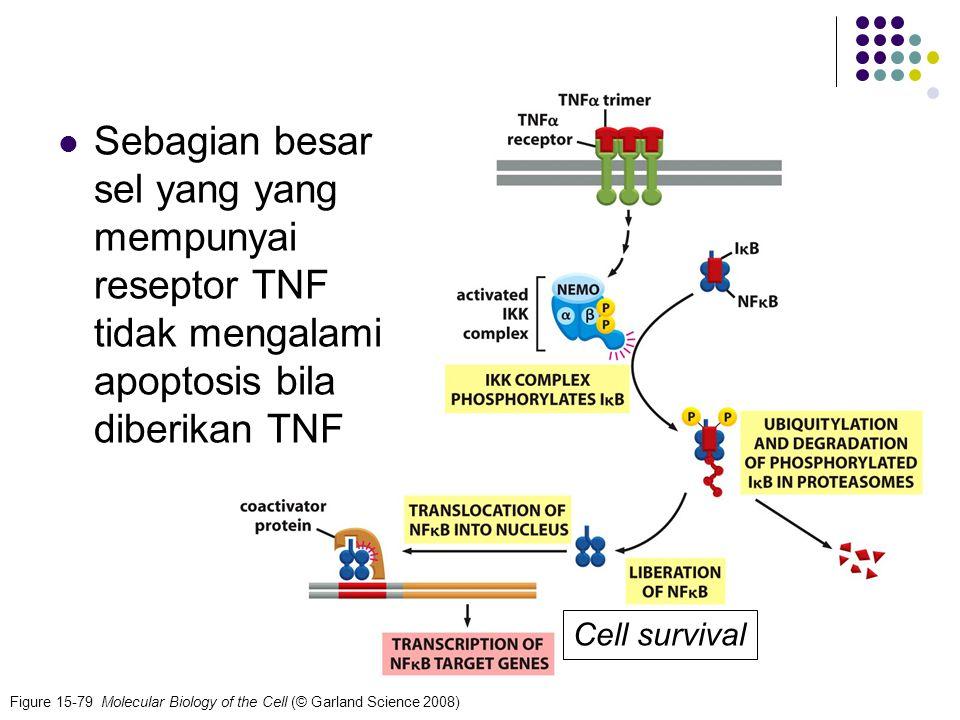 60 Figure 15-79 Molecular Biology of the Cell (© Garland Science 2008) Sebagian besar sel yang yang mempunyai reseptor TNF tidak mengalami apoptosis b