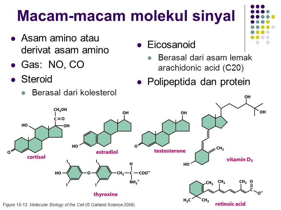 49 Penutupan stomata ABA (abscisic acid) dihasilkan pada suhu tinggi dan kelembaban rendah Osmolaritas turun, tekanan (turgor) turun www-biology.ucsd.edu/.../clickablegc.htmlwww-biology.ucsd.edu/.../clickablegc.html, 7-5-09