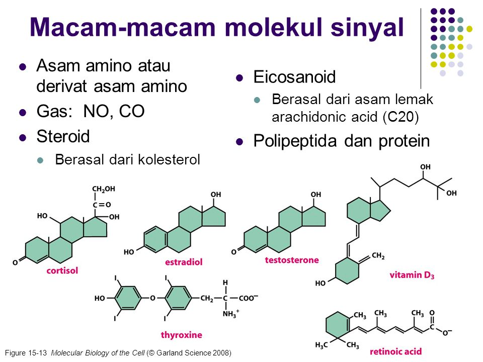 8 Macam-macam molekul sinyal Eicosanoid Berasal dari asam lemak arachidonic acid (C20) Polipeptida dan protein Asam amino atau derivat asam amino Gas: