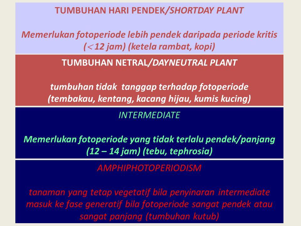 TUMBUHAN HARI PENDEK/SHORTDAY PLANT Memerlukan fotoperiode lebih pendek daripada periode kritis (  12 jam) (ketela rambat, kopi) TUMBUHAN NETRAL/DAYN