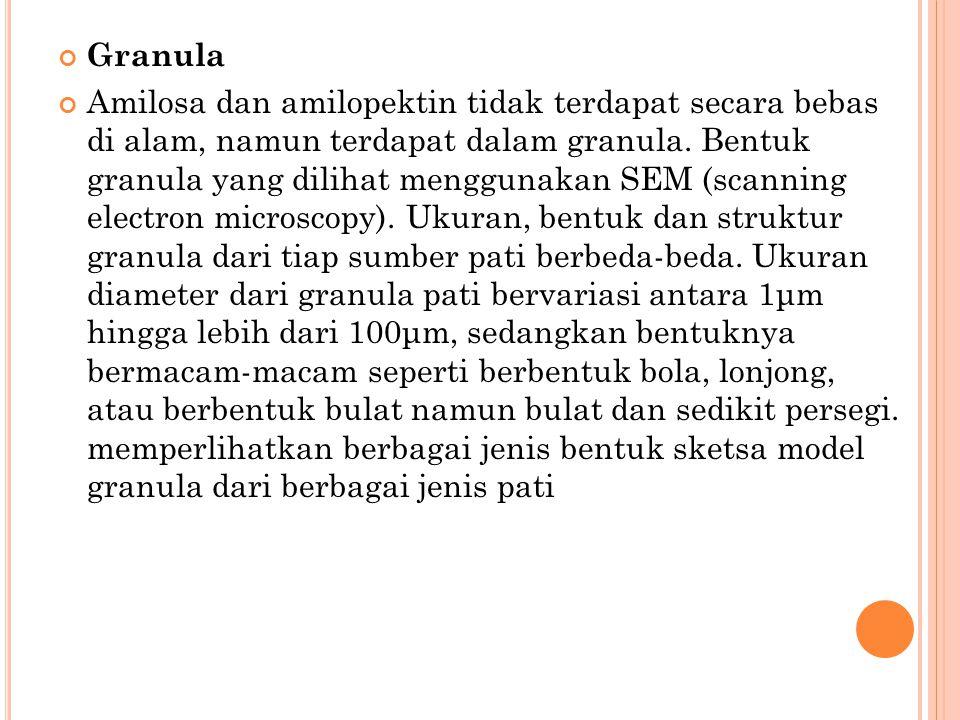Granula Amilosa dan amilopektin tidak terdapat secara bebas di alam, namun terdapat dalam granula. Bentuk granula yang dilihat menggunakan SEM (scanni