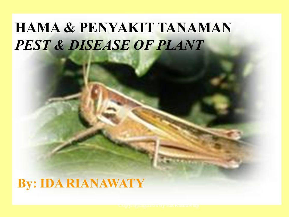 HAMA & PENYAKIT TANAMAN PEST & DISEASE OF PLANT By: IDA RIANAWATY Copyright@2010 by Ida Rianawaty