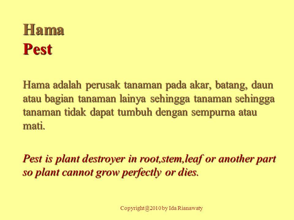 HamaPest Hama adalah perusak tanaman pada akar, batang, daun atau bagian tanaman lainya sehingga tanaman sehingga tanaman tidak dapat tumbuh dengan se