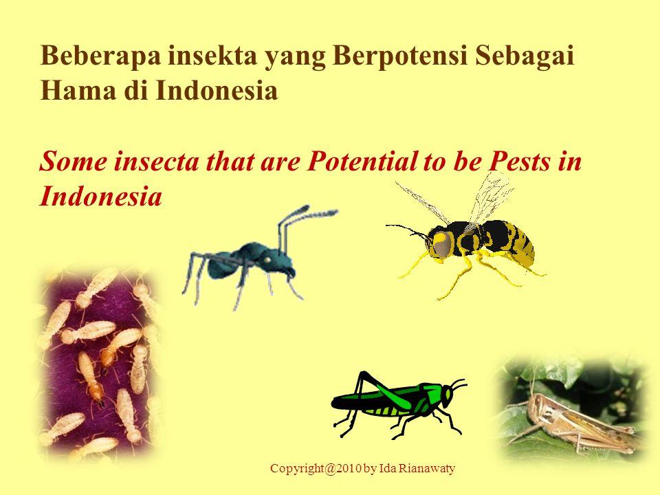 Beberapa insekta yang Berpotensi Sebagai Hama di Indonesia Some insecta that are Potential to be Pests in Indonesia Copyright@2010 by Ida Rianawaty