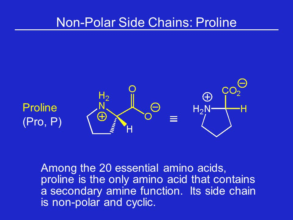 Non-Polar Side Chains: Proline Among the 20 essential amino acids, proline is the only amino acid that contains a secondary amine function.