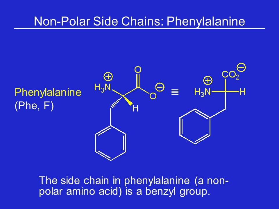 Non-Polar Side Chains: Phenylalanine The side chain in phenylalanine (a non- polar amino acid) is a benzyl group.