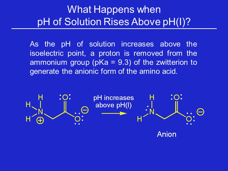 As the pH of solution increases above the isoelectric point, a proton is removed from the ammonium group (pKa = 9.3) of the zwitterion to generate the anionic form of the amino acid.