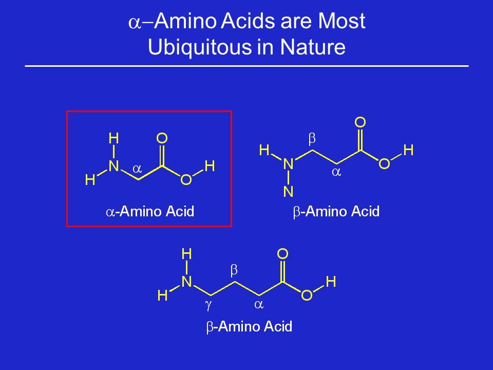 Brønsted Basic Side Chains: Histidine Histidine (His, H) Histidine is a basic amino acid, but less basic than lysine and arginine.