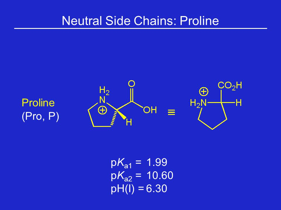 Neutral Side Chains: Proline Proline (Pro, P) pK a1 = 1.99 pK a2 =10.60 pH(I) =6.30