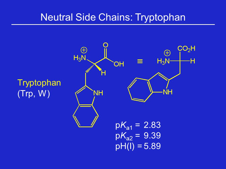 Neutral Side Chains: Tryptophan Tryptophan (Trp, W) pK a1 = 2.83 pK a2 =9.39 pH(I) =5.89