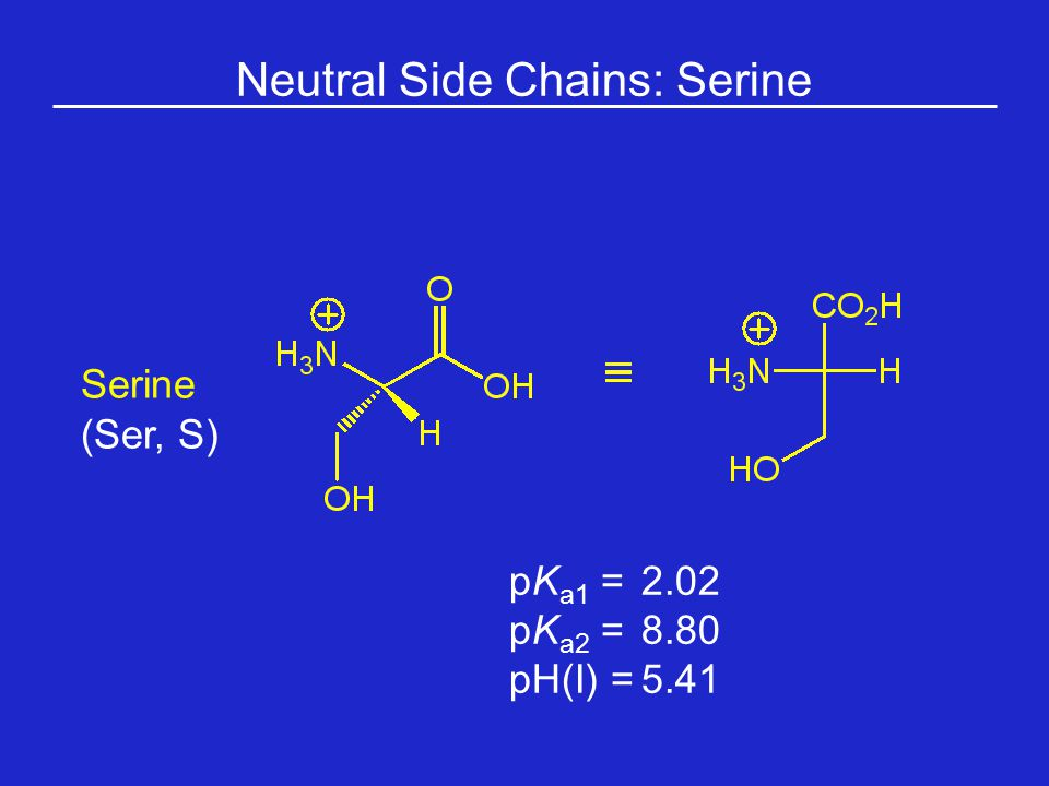 Neutral Side Chains: Serine Serine (Ser, S) pK a1 = 2.02 pK a2 =8.80 pH(I) =5.41