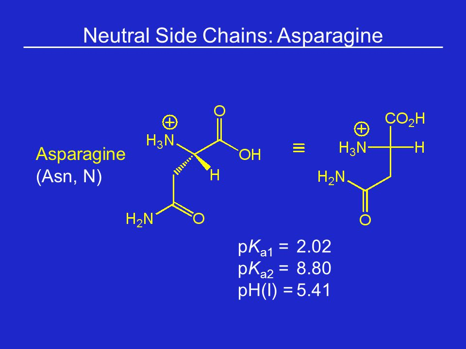 Neutral Side Chains: Asparagine Asparagine (Asn, N) pK a1 = 2.02 pK a2 =8.80 pH(I) =5.41