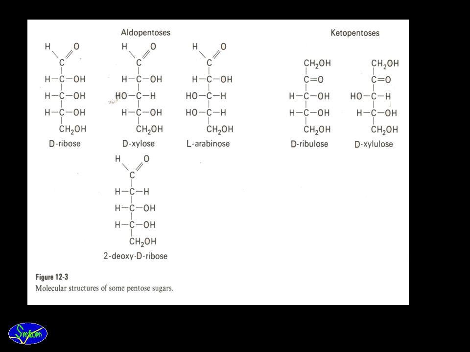 3. Pentose. Beberapa senyawa pentose penting, yang mengandung 5C, dapat dibagi menjadi