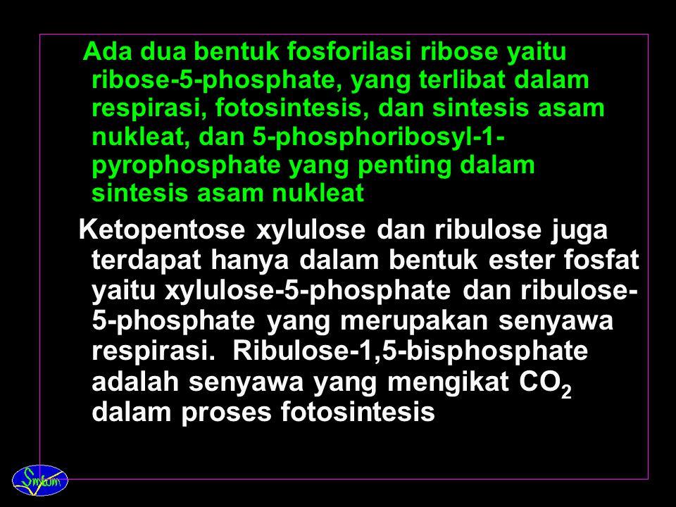 Ribose dan turunannya, ( deoxyribose ), biasanya terdapat hanya dalam bentuk gabungan.