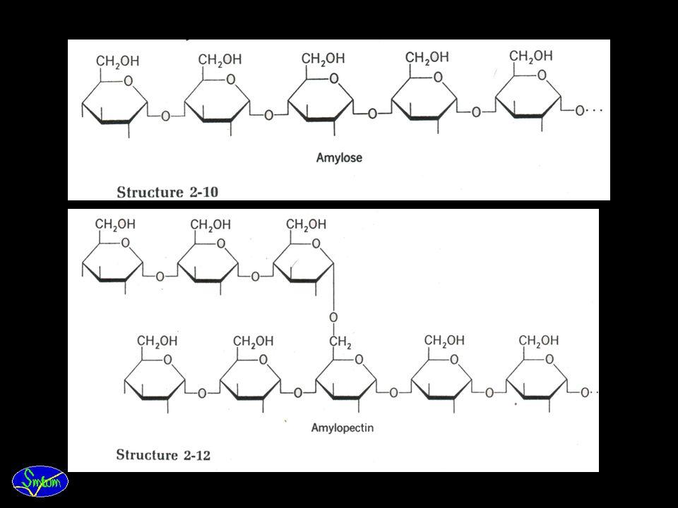 Pati · Bentuk simpanan utama dari karbohidrat pada kebanyakan tanaman adalah pati dan terdapat dalam pastida, yang berasal dari hasil fotosintesis, at