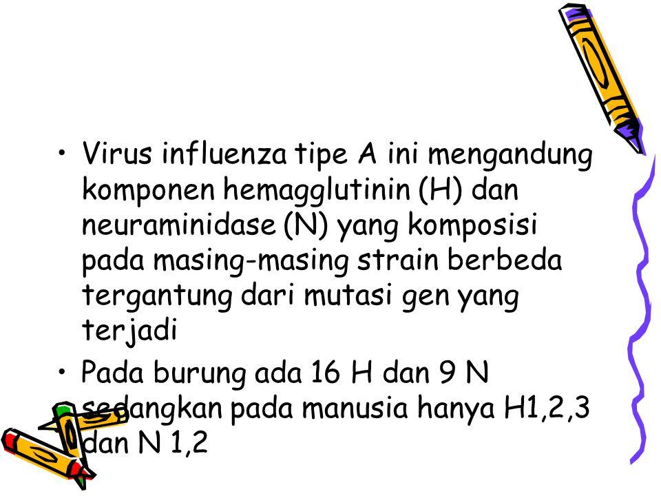 Virus influenza tipe A ini mengandung komponen hemagglutinin (H) dan neuraminidase (N) yang komposisi pada masing-masing strain berbeda tergantung dari mutasi gen yang terjadi Pada burung ada 16 H dan 9 N sedangkan pada manusia hanya H1,2,3 dan N 1,2