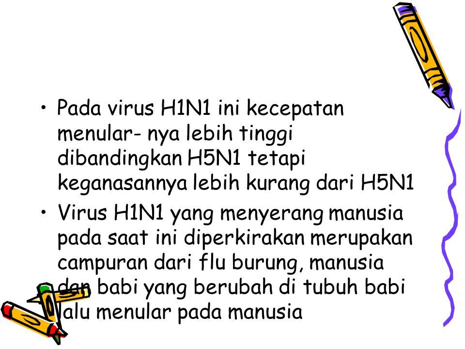 Pada virus H1N1 ini kecepatan menular- nya lebih tinggi dibandingkan H5N1 tetapi keganasannya lebih kurang dari H5N1 Virus H1N1 yang menyerang manusia pada saat ini diperkirakan merupakan campuran dari flu burung, manusia dan babi yang berubah di tubuh babi lalu menular pada manusia
