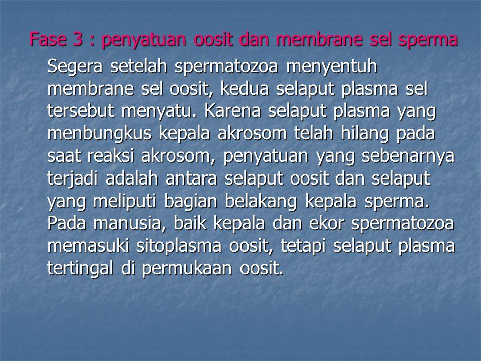 Fase 3 : penyatuan oosit dan membrane sel sperma Segera setelah spermatozoa menyentuh membrane sel oosit, kedua selaput plasma sel tersebut menyatu. K