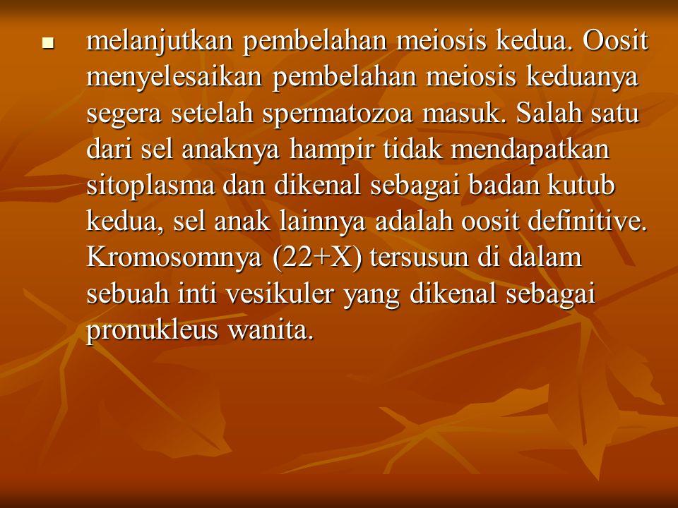 melanjutkan pembelahan meiosis kedua. Oosit menyelesaikan pembelahan meiosis keduanya segera setelah spermatozoa masuk. Salah satu dari sel anaknya ha