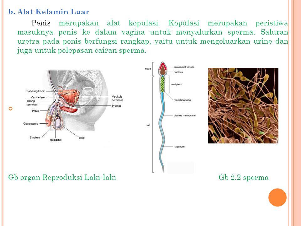 2.Alat-alat Reproduksi Pada Wanita a.