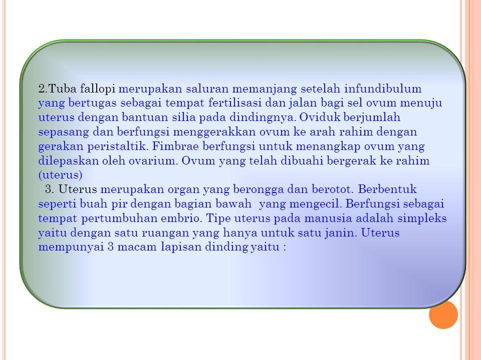 2.Tuba fallopi merupakan saluran memanjang setelah infundibulum yang bertugas sebagai tempat fertilisasi dan jalan bagi sel ovum menuju uterus dengan