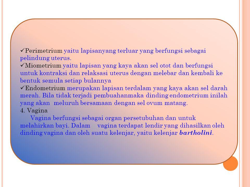 b.Alat Kelamin Luar 1.
