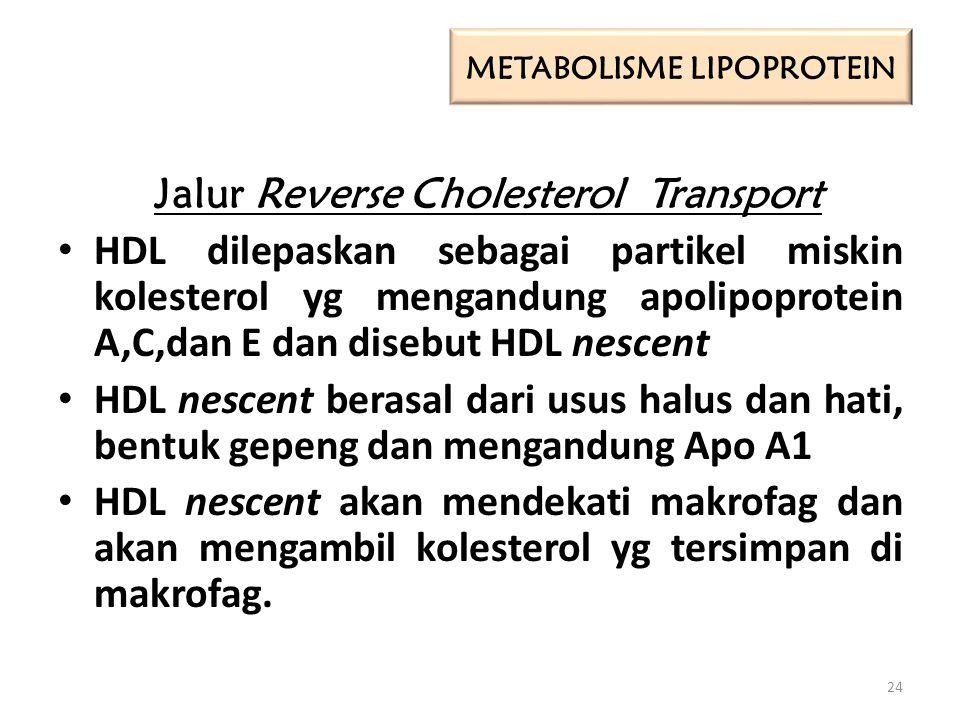 Jalur Reverse Cholesterol Transport HDL dilepaskan sebagai partikel miskin kolesterol yg mengandung apolipoprotein A,C,dan E dan disebut HDL nescent HDL nescent berasal dari usus halus dan hati, bentuk gepeng dan mengandung Apo A1 HDL nescent akan mendekati makrofag dan akan mengambil kolesterol yg tersimpan di makrofag.