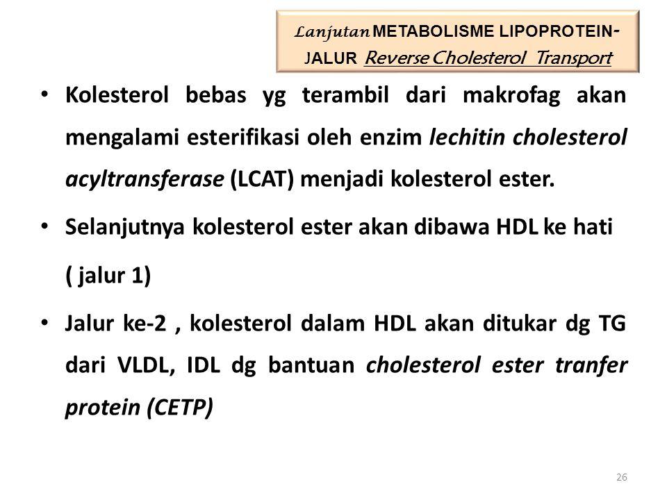 Kolesterol bebas yg terambil dari makrofag akan mengalami esterifikasi oleh enzim lechitin cholesterol acyltransferase (LCAT) menjadi kolesterol ester.