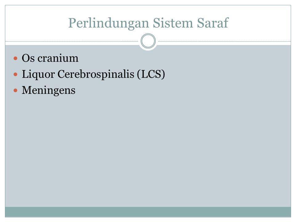 Perlindungan Sistem Saraf Os cranium Liquor Cerebrospinalis (LCS) Meningens