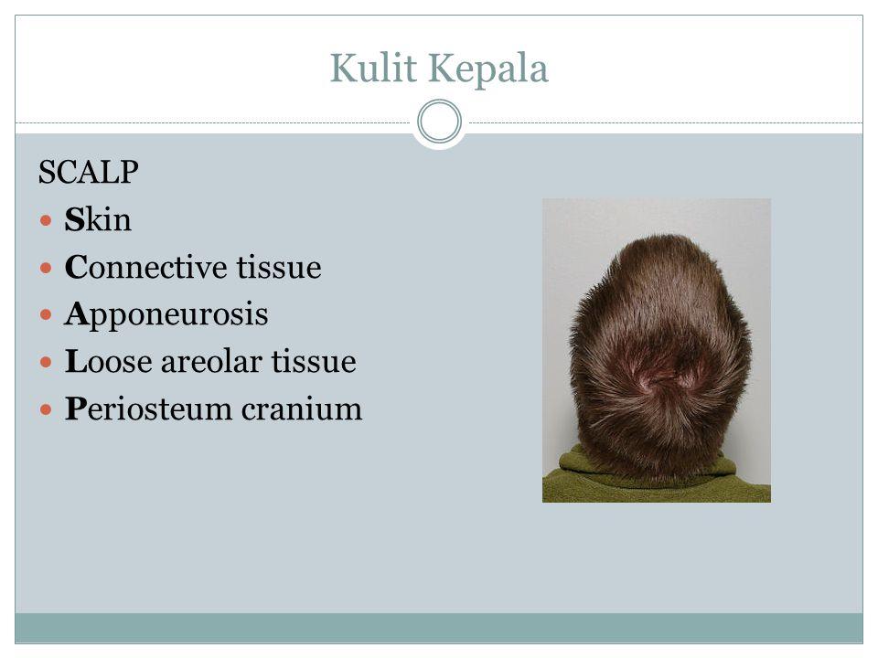 Kulit Kepala SCALP Skin Connective tissue Apponeurosis Loose areolar tissue Periosteum cranium