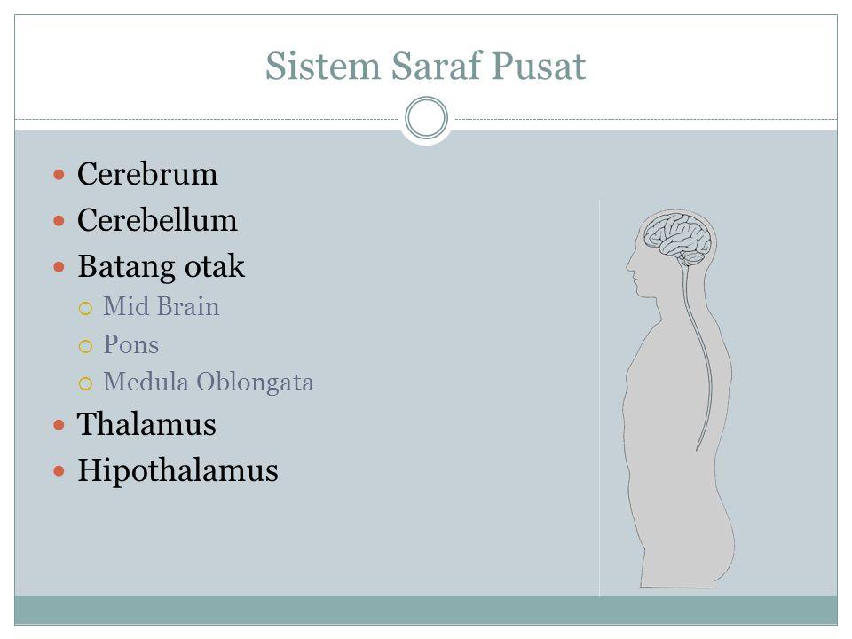 Sistem Saraf Pusat Cerebrum Cerebellum Batang otak  Mid Brain  Pons  Medula Oblongata Thalamus Hipothalamus