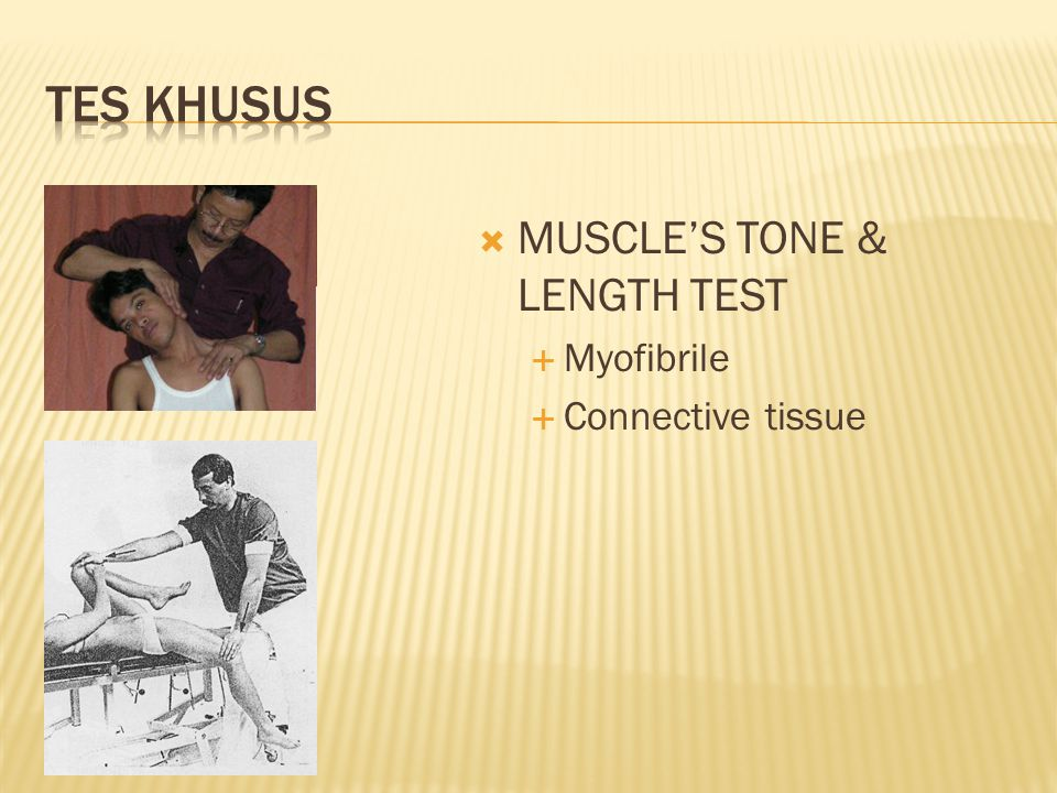  MUSCLE'S TONE & LENGTH TEST  Myofibrile  Connective tissue