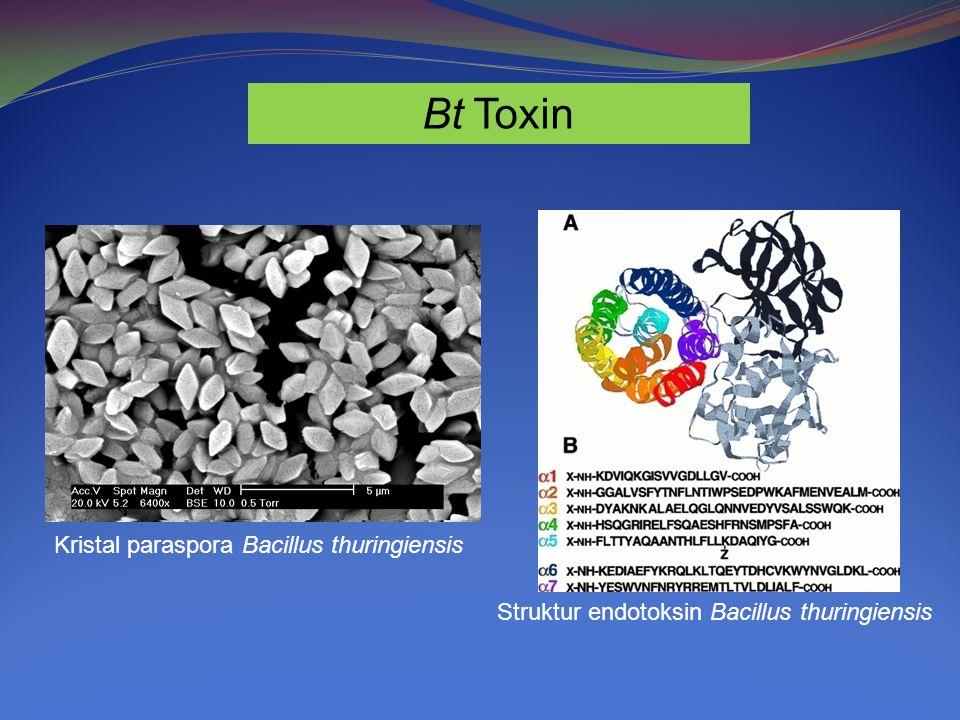 Bt Toxin Kristal paraspora Bacillus thuringiensis Struktur endotoksin Bacillus thuringiensis