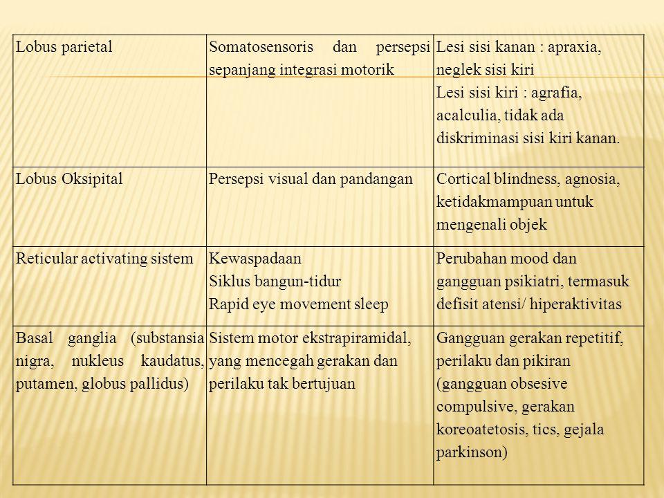 Lobus parietal Somatosensoris dan persepsi sepanjang integrasi motorik Lesi sisi kanan : apraxia, neglek sisi kiri Lesi sisi kiri : agrafia, acalculia
