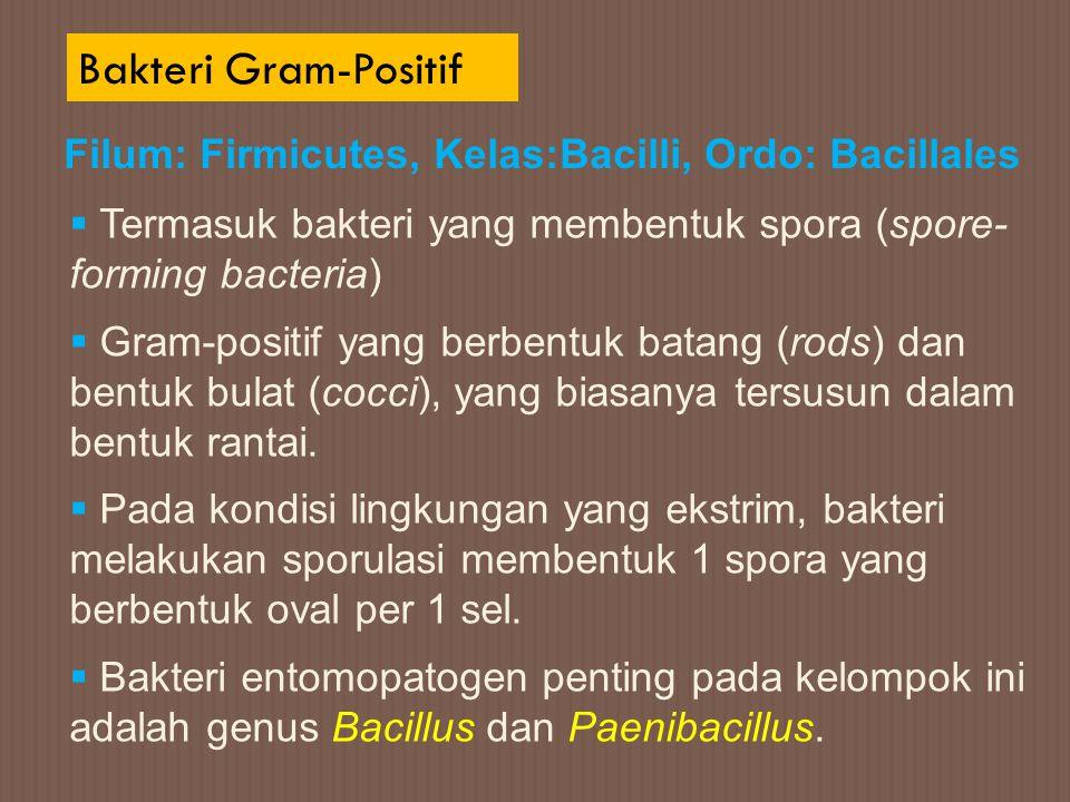 Bakteri Gram-Positif Filum: Firmicutes, Kelas:Bacilli, Ordo: Bacillales  Termasuk bakteri yang membentuk spora (spore- forming bacteria)  Gram-posit