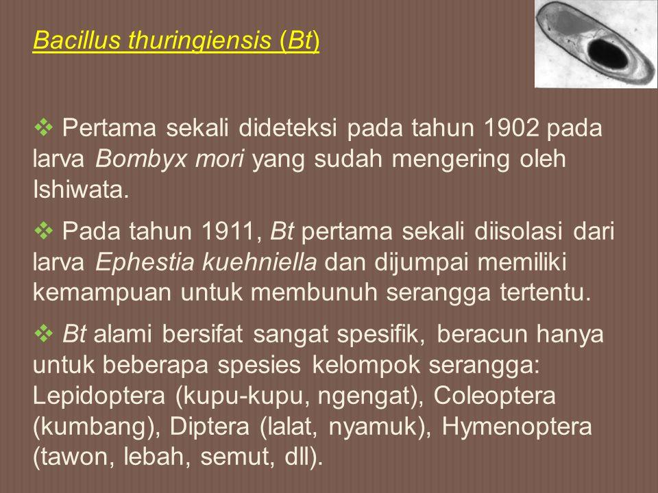  Pertama sekali dideteksi pada tahun 1902 pada larva Bombyx mori yang sudah mengering oleh Ishiwata.  Pada tahun 1911, Bt pertama sekali diisolasi d