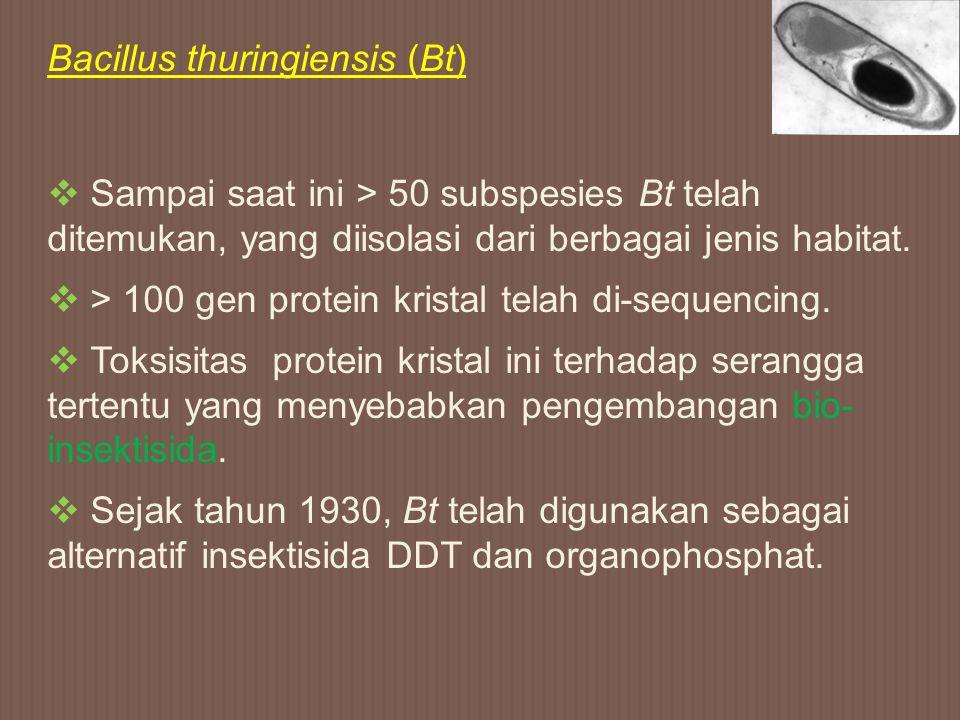 Bacillus thuringiensis (Bt)  Sampai saat ini > 50 subspesies Bt telah ditemukan, yang diisolasi dari berbagai jenis habitat.  > 100 gen protein kris