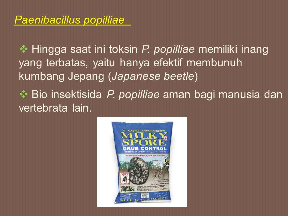 Paenibacillus popilliae  Hingga saat ini toksin P. popilliae memiliki inang yang terbatas, yaitu hanya efektif membunuh kumbang Jepang (Japanese beet